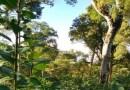 Embrapa alerta: É hora de combater a broca-da-erva mate