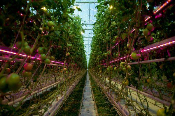 contruccion nuevos invernaderos en Ryczywoł Polonia