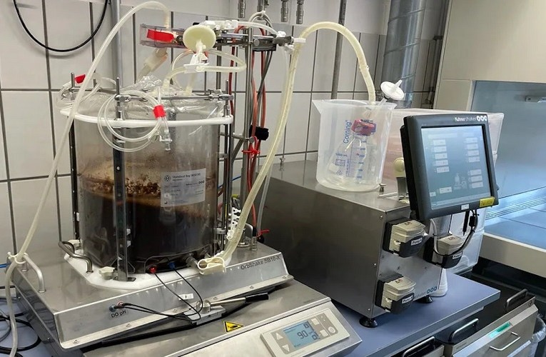 Primeiro chocolate artificial cultivado em laboratório