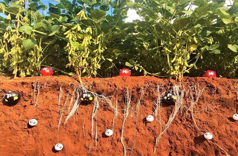pH do solo influencia na disponibilidade do Fósforo?
