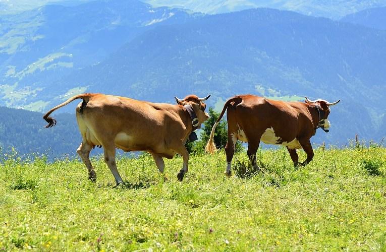 Casos de vaca louca não oferece risco a produção bovina