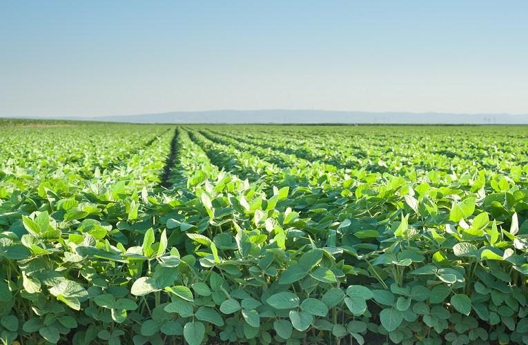 Mapa libera plantio de soja em fevereiro no Mato Grosso
