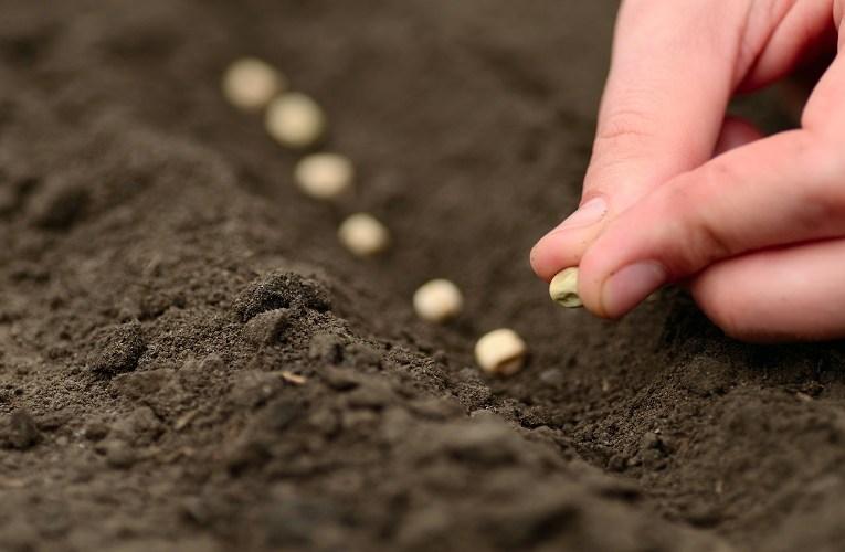 Produtores que devem respeitar calendário de semeadura e Zarc