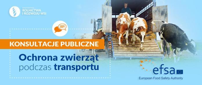 Ochrona zwierząt podczas transportu – ruszają konsultacje