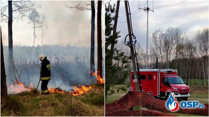 35 hektarów lasu spłonęło w nadleśnictwie Włodawa pożar gaszono z ziemi i powietrza