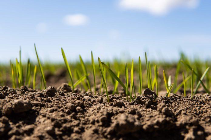 Co dla rolników w Krajowym Planie Odbudowy?