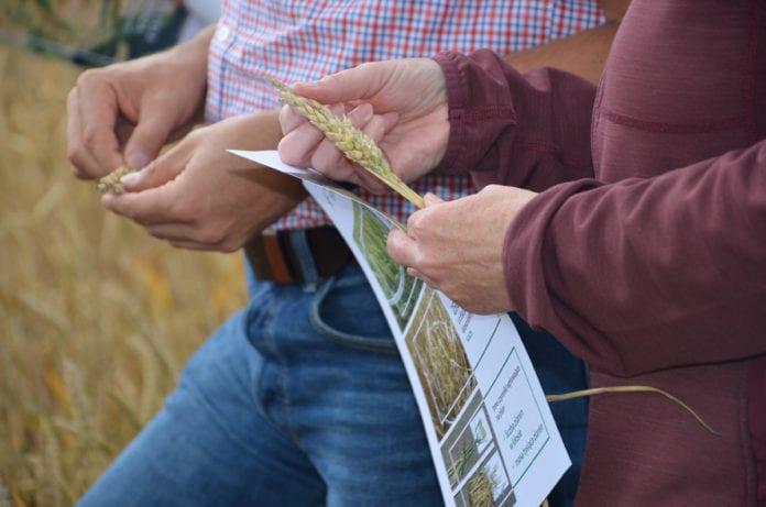Arnaud Rousseau, Copa-Cogeca, Jan Krzysztof Ardanowski, Mateusz Morawiecki, rolnik, rolnictwo, portal rolny, zysk rolnika, szacowanie strat suszowych w gospodarstwach utrzym,