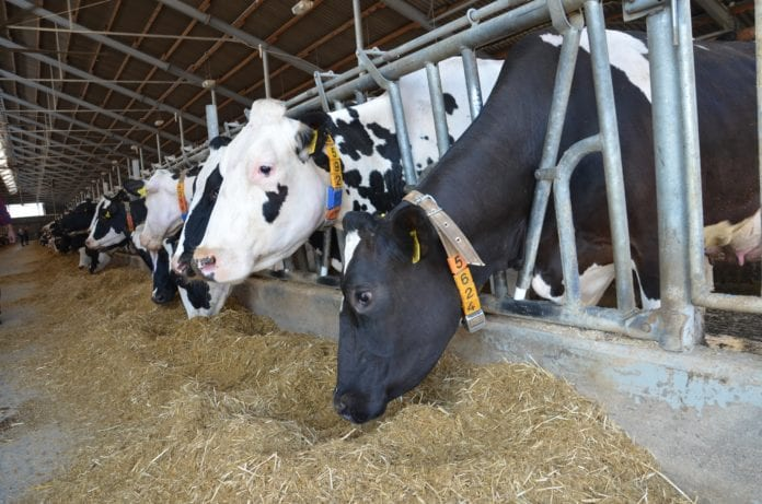 oporność na antybiotyki, rolnik, rolnictwo, portal rolny, Antybiotykooporność, MRSA, PanaMast, Westway Health