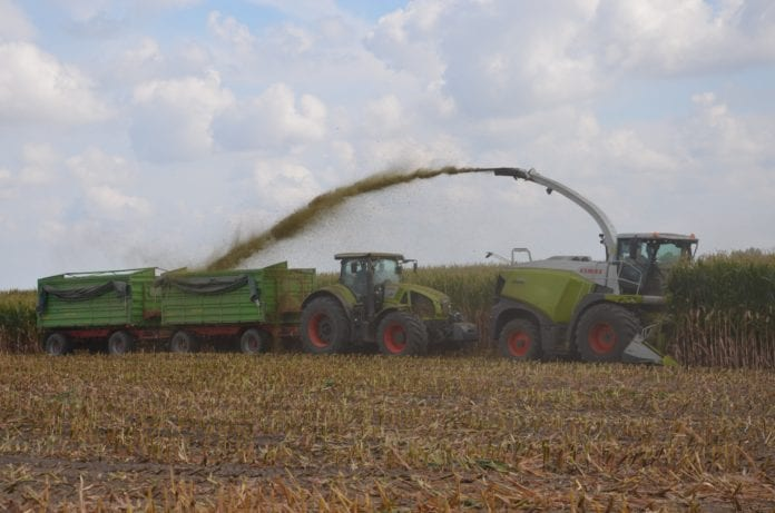 rolnik, rolnictwo, kukurydza, kukurydza na kiszonkę, COBORU