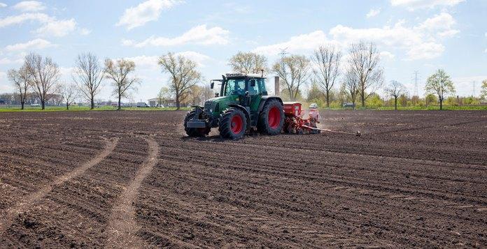Siewy kukurydzy – 2021