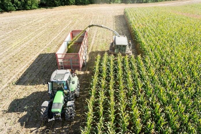 Rozpoczęły się zbiory kukurydzy w USA