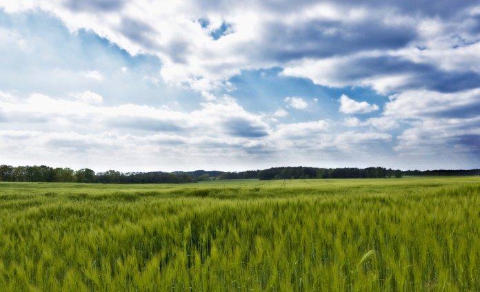 Zrównoważone rolnictwo – szansa dla rolnika i całej branży spożywczej