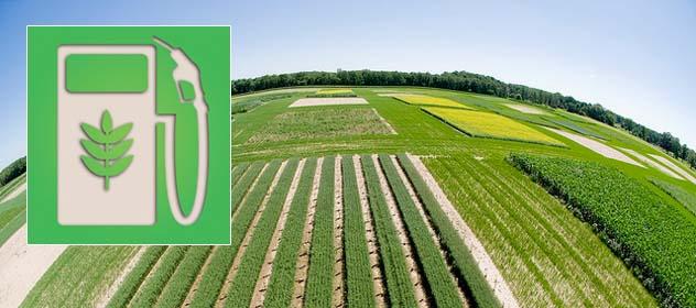 Mniej biopaliw, a więcej paszy i żywności do 2030 roku