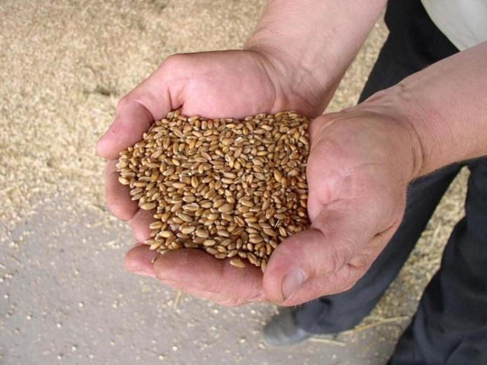 Ceny zbóż, Credit Agricole, AgroMapa