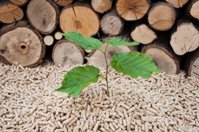 przełom na rynku biomasy, oze, biomasa, rośliny energetyczne, wierzba