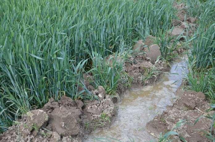 rolnik, rolnictwo, susza, deszcz, ryzyko suszy, bilans wodny