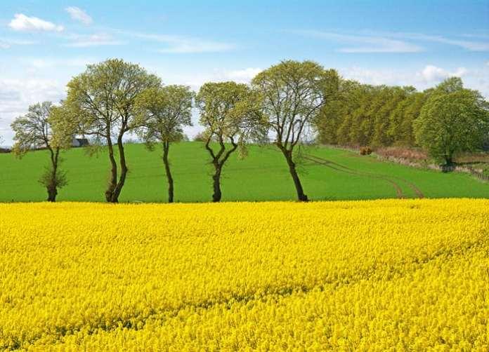 Bayer: Partnerstwo dla sukcesu w uprawie rzepaku – innowacyjne odmiany Dekalb