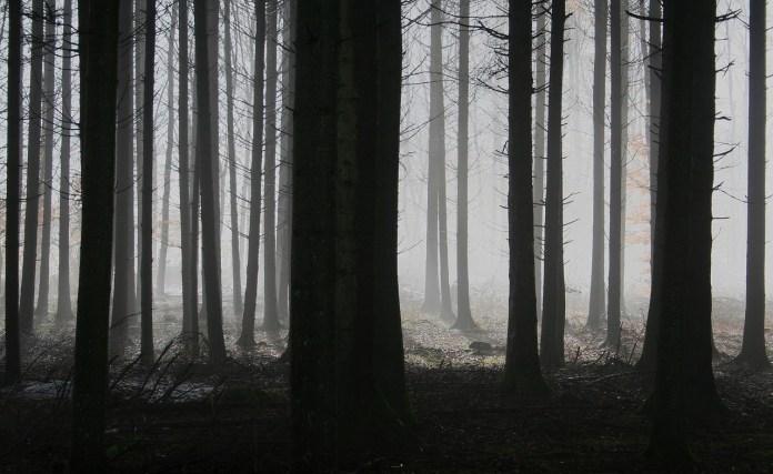 Martwe drewno w lesie to nie marnotrawstwo