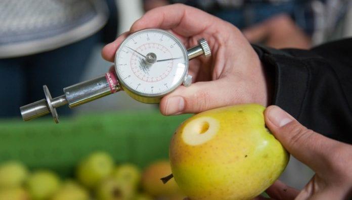 INNVOGO, przechowywanie jabłek, regulator wzrostu, FruitSmart