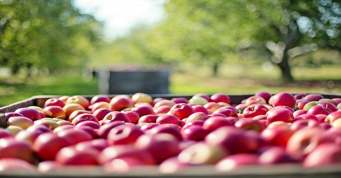 Państwowa Inspekcja Ochrony Roślin i Nasiennictwa, Kolumbijski Instytut Rolnictwa, jabłka, eksport jabłek