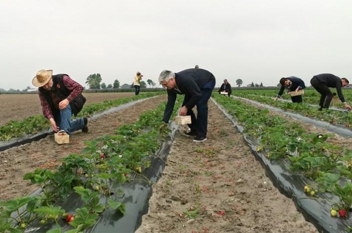 Są już wytyczne dla producentów rolnych zatrudniających cudzoziemców