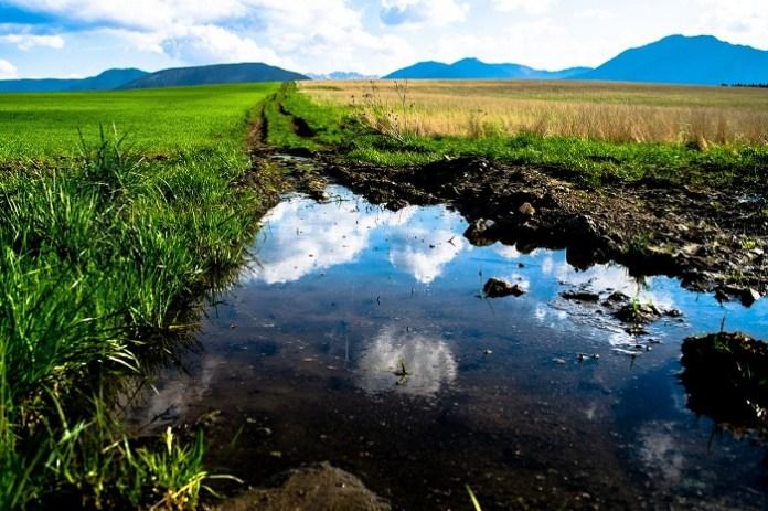 Wsparcie na inwestycje chroniące przed ASF lub powodzią