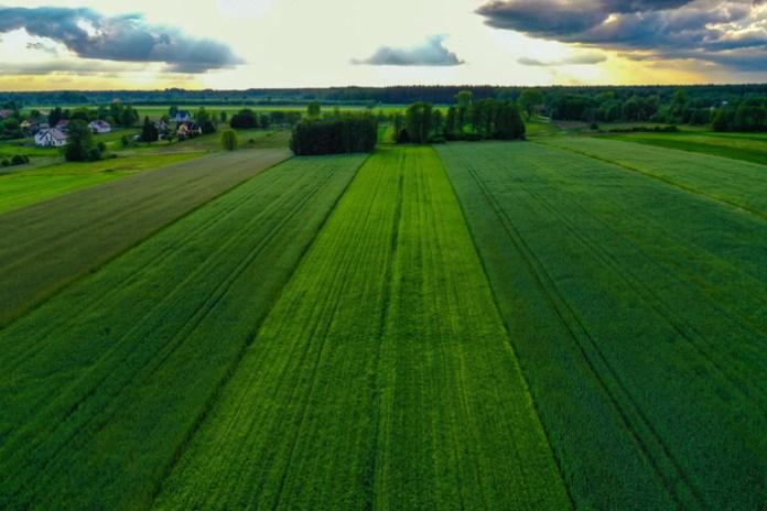 Polskie rolnictwo w liczbach