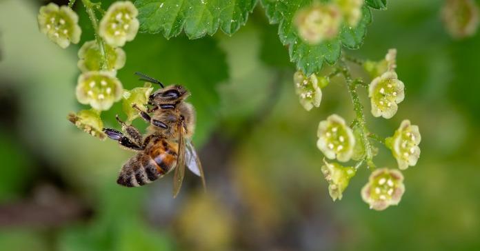 owady, pestycydy, wymieranie owadów