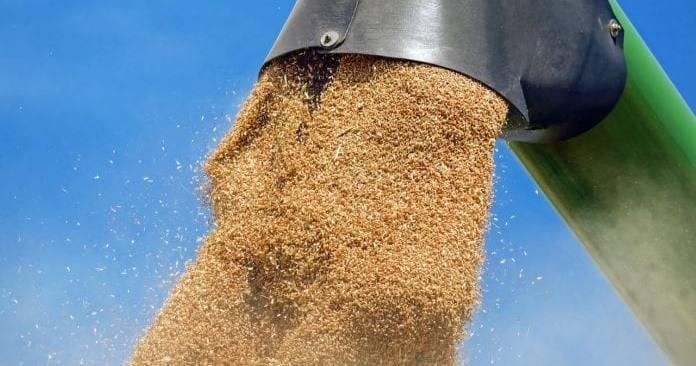 pszenica, ceny pszenicy, ING