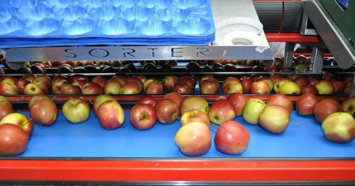 owoce, warzywa, koronawirus, przepływ towarów, żywności, Unia Owocowa