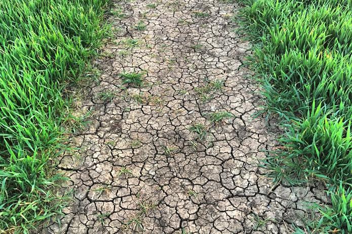 rolnik, rolnictwo, deszcz, susza, klęska suszy