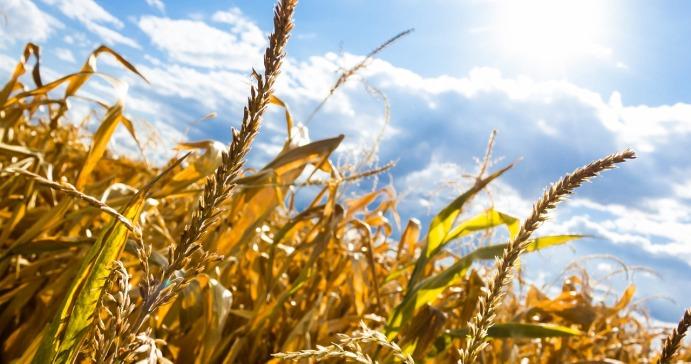 Susza rolnicza prawie we wszystkich województwach