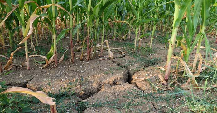 susza, rolnictwo, MRiRW, rekompensaty dla rolników, sadownictwo, ceny owoców i warzyw, przemysł spożywczy