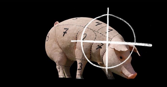 ministerstwo rolnictwa, koronawirus, ASF, trzoda chlewna, świnie, ceny wieprzowiny