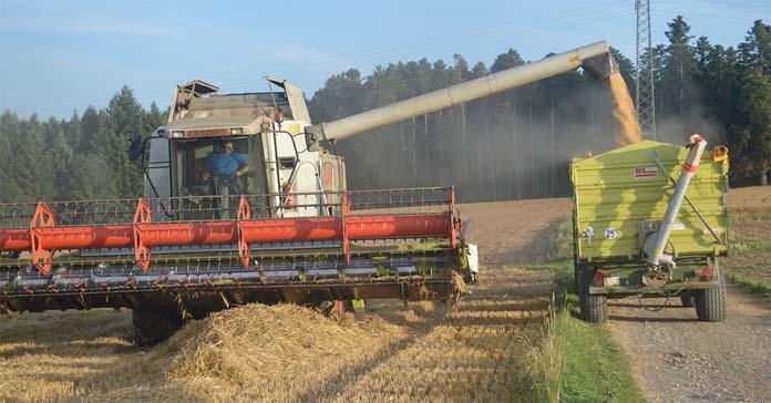 Ceny zbóż, ceny pszenicy, MATIF
