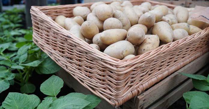 ziemniaki, Jakubowice, wypadek na wsi