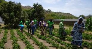 Green jobs for smallholders
