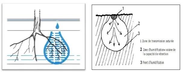 Figure 2: Schéma de principe de la micro-irrigation : apporter l'eau directement aux racines   (Mathieu et al, 2007).