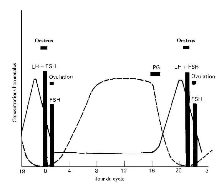 Figure 3 : Profils schématiques des concentrations hormonales plasmatiques au cours du cycle oestral. (Peters et al, 1995).  - - - -, progestérone ; ——, oestradiol ; PG, prostaglandines.