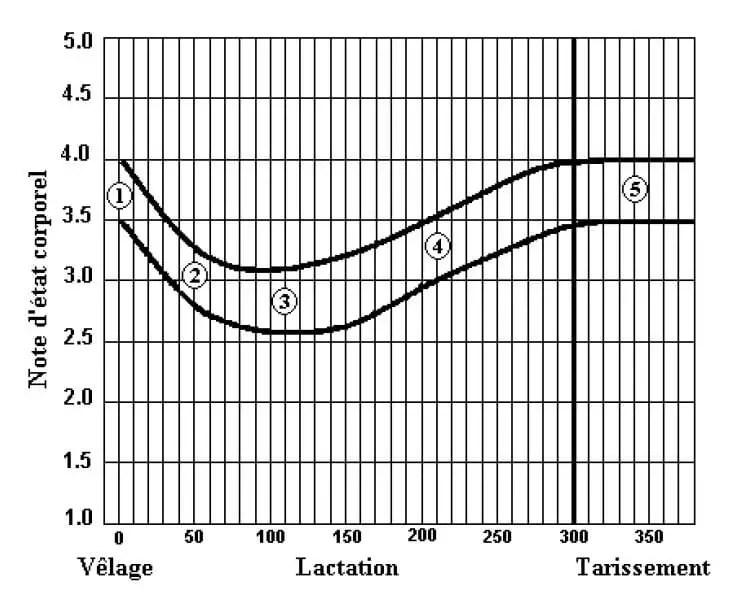 Figure 6 : Grille de profil de note d'état corporel et représentation des valeurs idéales pour une vache laitière multipare. (Rodenburg, 1992 cité par Laurent, 2006).
