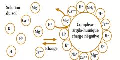 Le complexe argilo-humique (CAH)