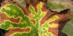 Interactions plantes- pathogènes