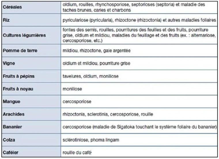 Tableau 2 Maladies fongiques touchant les principales cultures dans le monde (Source: Bayer, 2001).