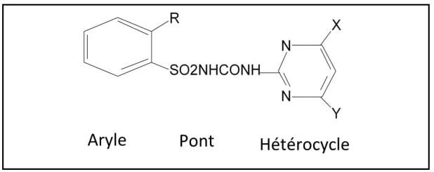 Figure 2: Structure générale des sulfonylurées Groupements R activants la fonction herbicide: CO2CH3; NO2; F; Cl; Br; SO2CH3; SCH3; SO2N(CH3)2; CF3; CH2OCH3; OCF3. Groupements non activant: COOH; OH; X=CH3; Y=OCH3