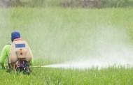 Effets d'un herbicide de la famille des sulfonylurées sur la communauté bactérienne d'un sol agricole