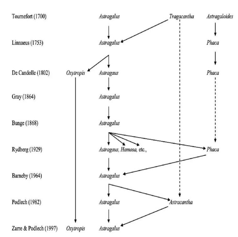 Figure 1. Historique de la taxonomie du genre Astragalus L. (Wojciechowski et al.1999).