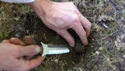 La récolte des truffes