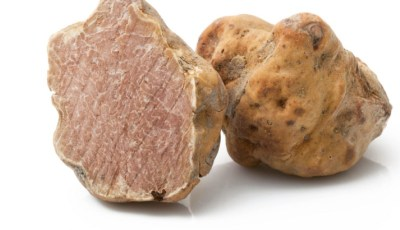 Mycorhizes à truffes