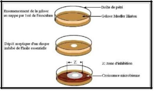 Fig.: Illustration de la méthode d'aromatogramme (ZAIKI, 1988).