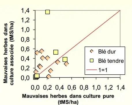 Figure 1 : Développement des adventices par rapport aux cultures pures de céréales